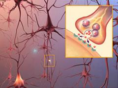 нейтроны мозга